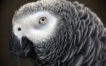 parrot_3112992b
